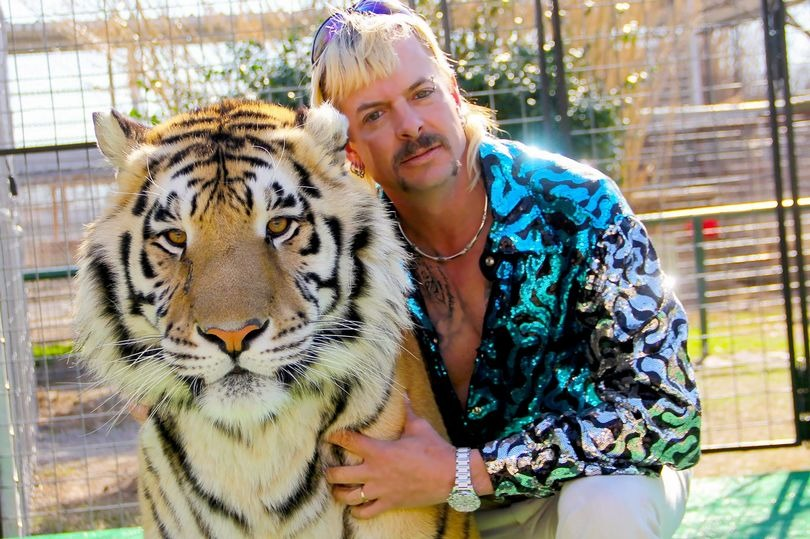 Evil big cat keeper who shot 5 tigers tried to have animal activist assassinated